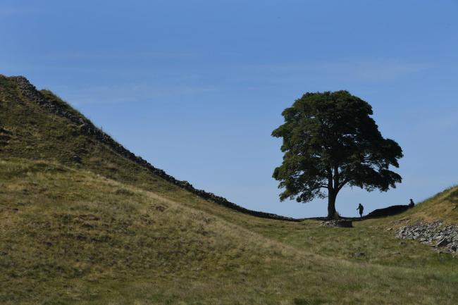 Sycamore Gap on Hadrian's Wall has long been a popular visitor attraction for tourists across the world.