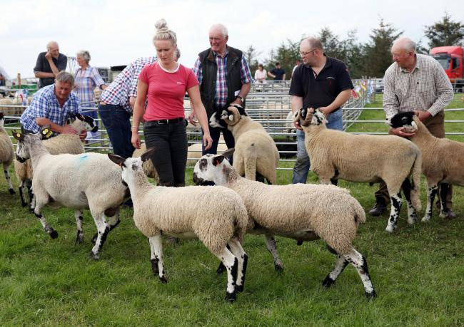 Sheep judging at Gilsland Show last year. PHOTO: Paul Norris