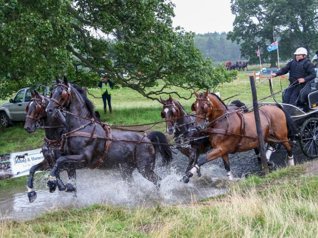 Carriage drivers will be heading to Bywell this weekend for the British Carriage Driving Championships. 						       Photo: NINA EDMINSON