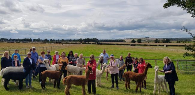 Alpaca walks offer something different