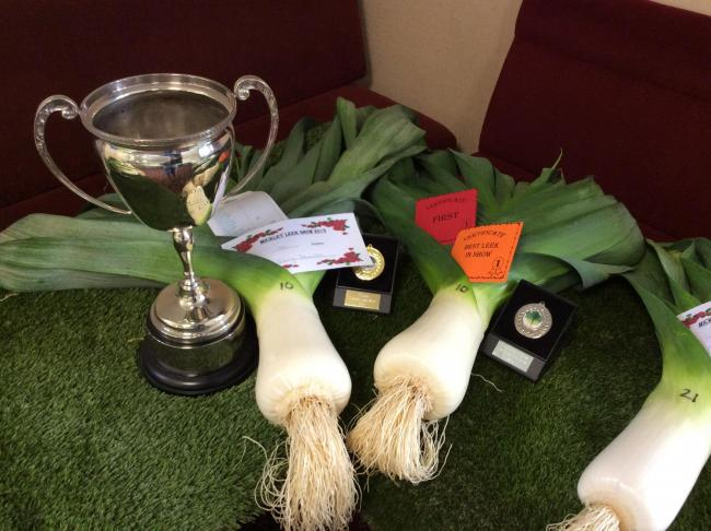 The winning leeks at Mickley Leek Show 2019.
