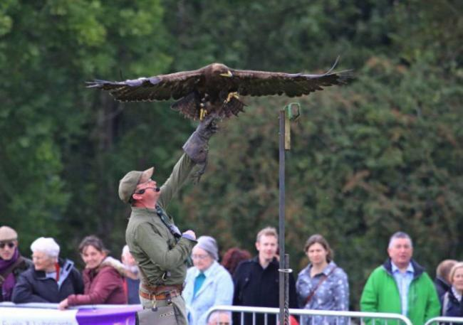 Falconry Days owner Mark French regularly holds public demonstrations to showcase his bird of prey centre.