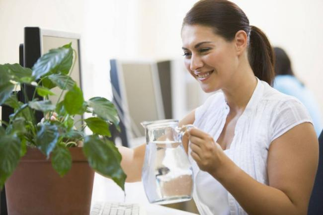 A new study claims that plants can boost productivity and improve workers' sense of wellbeing.