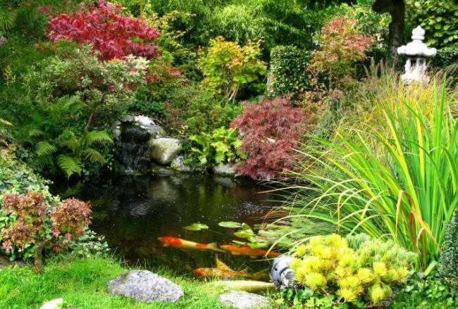 Choosing the right fish for your pond