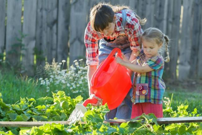 Growing popularity of allotment plots
