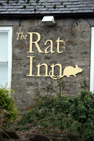 The Rat Inn, Anick.