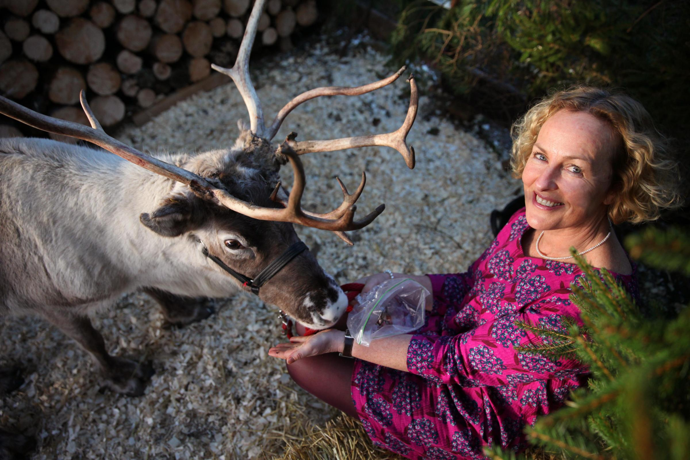 K491541 Mary Ann Rogers. Artist Mary Ann Rogers, pictured here with Pancake the Reindeer in 2015, is to open her gallery for a Christmas exhibition