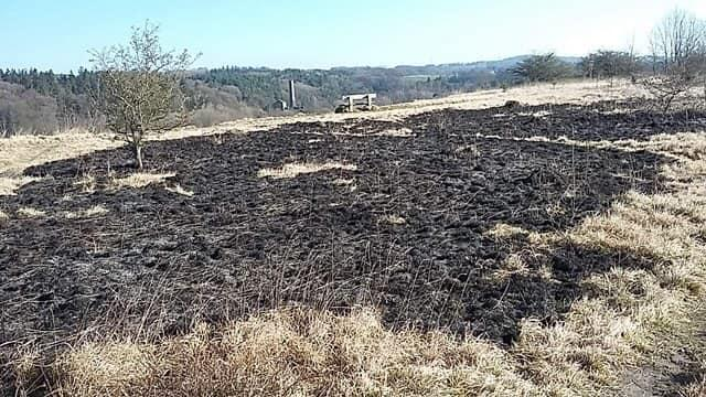The aftermath of the fire at Spetchells Nature Reserve. Photo: PRUDHOE MATTERS